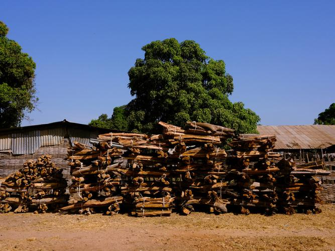 Rosewood – ostensibly deadfall – for sale near Djendo. Image by Ricci Shryock/Mongabay. Guinea-Bissau, 2020.